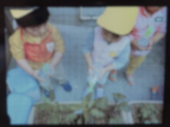 保育の様子♪ ホールクラス  野菜苗、種植えをしました!_c0293682_23043916.jpg