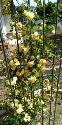 初夏の庭_c0197684_13270839.jpg