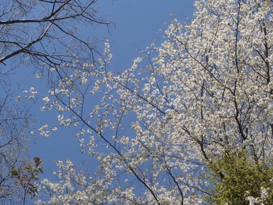 春らしき_f0064906_17271272.jpg