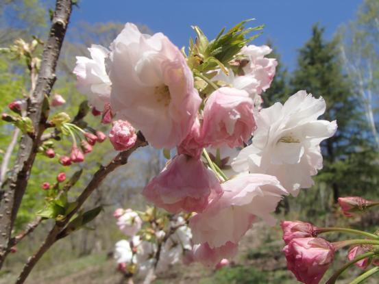 春らしき_f0064906_17273234.jpg