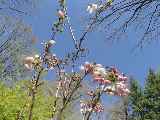春らしき_f0064906_17273513.jpg