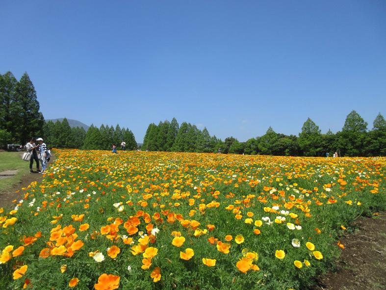 ■福岡―宮崎―大分、三日間850キロのドライブ・ツアー_d0190217_20453415.jpg