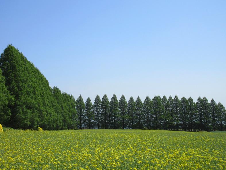 ■福岡―宮崎―大分、三日間850キロのドライブ・ツアー_d0190217_20464259.jpg