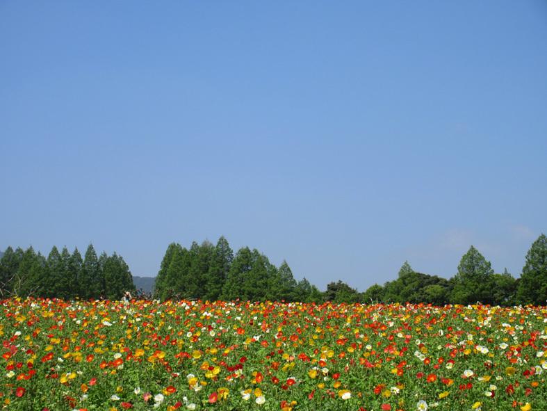 ■福岡―宮崎―大分、三日間850キロのドライブ・ツアー_d0190217_20470281.jpg