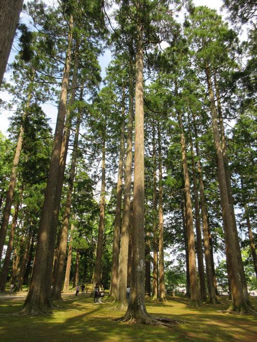 ■福岡―宮崎―大分、三日間850キロのドライブ・ツアー_d0190217_20484108.jpg