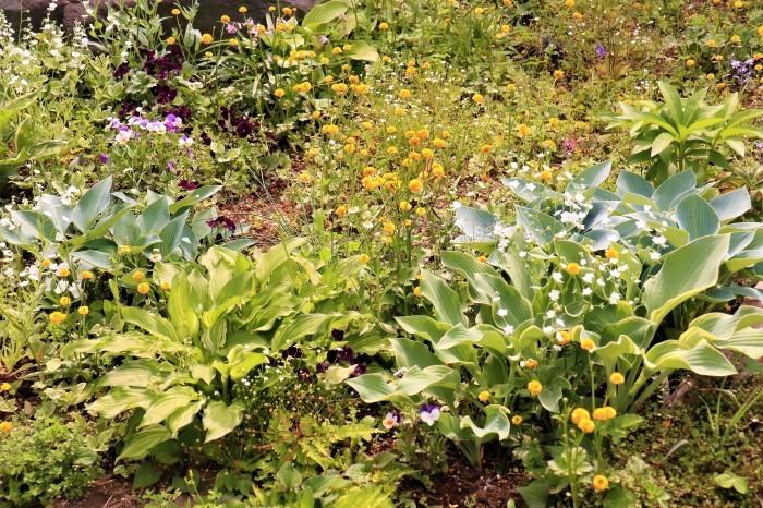 イングリッシュガーデンの花々_d0150720_11345346.jpg