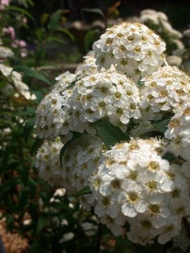 開花 Blooming《私の好きな花選集 Op.46》_e0103327_21591404.jpg
