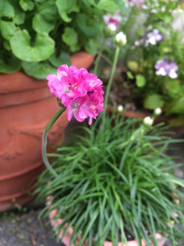開花 Blooming《私の好きな花選集 Op.46》_e0103327_21592039.jpg