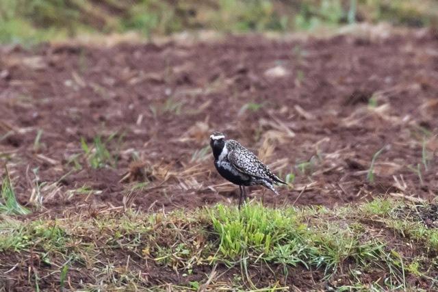 4/29 やはり雨の中の鳥見は楽しい (5/8記)_a0080832_19144201.jpg