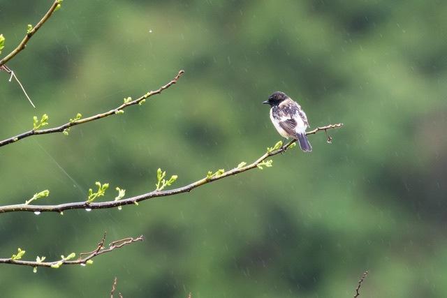 4/29 やはり雨の中の鳥見は楽しい (5/8記)_a0080832_19151960.jpg