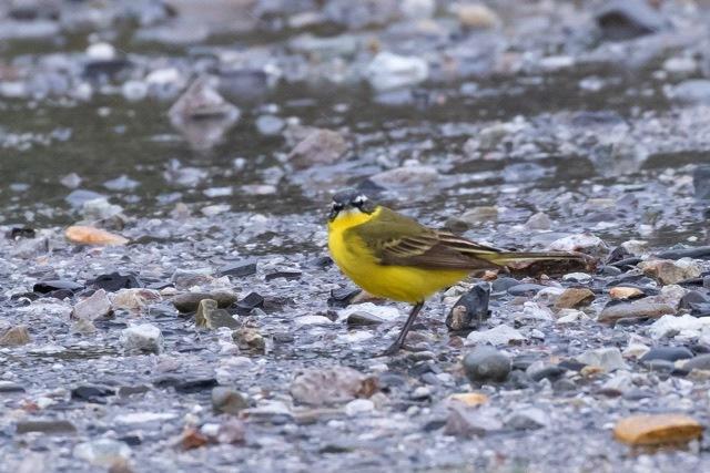 4/29 やはり雨の中の鳥見は楽しい (5/8記)_a0080832_19153159.jpg