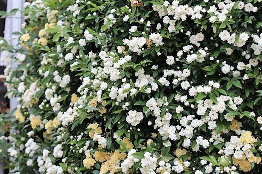 春の庭っぽくなってきた_c0134734_13515139.jpg