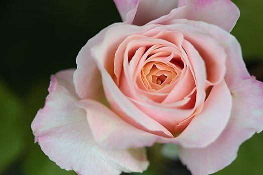 春の庭っぽくなってきた_c0134734_13515912.jpg