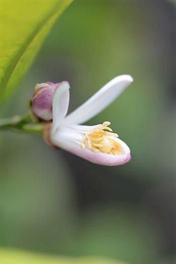 春の庭っぽくなってきた_c0134734_13520668.jpg