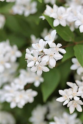 春の庭っぽくなってきた_c0134734_13521450.jpg