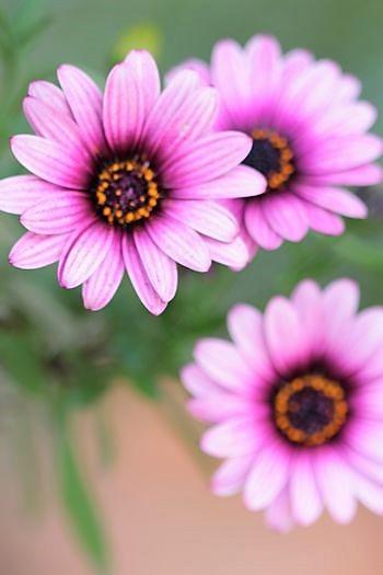 春の庭っぽくなってきた_c0134734_13522242.jpg