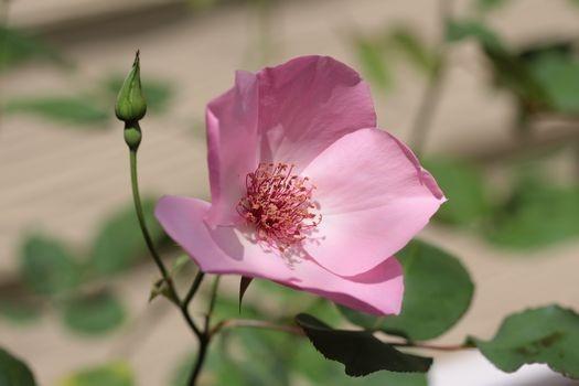春の庭っぽくなってきた_c0134734_13523037.jpg