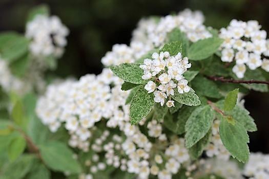 春の庭っぽくなってきた_c0134734_13523849.jpg