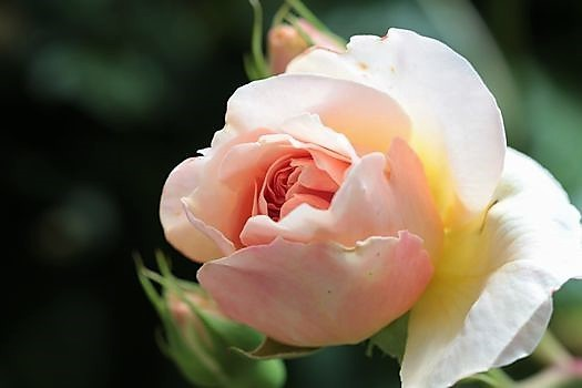 春の庭っぽくなってきた_c0134734_13524641.jpg