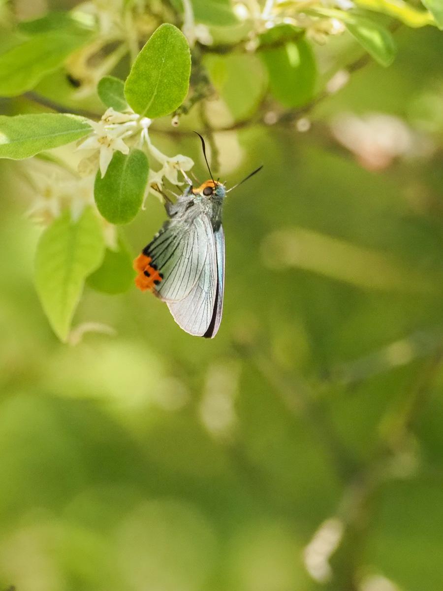 蝶も花から落ちる_b0316339_22065429.jpg