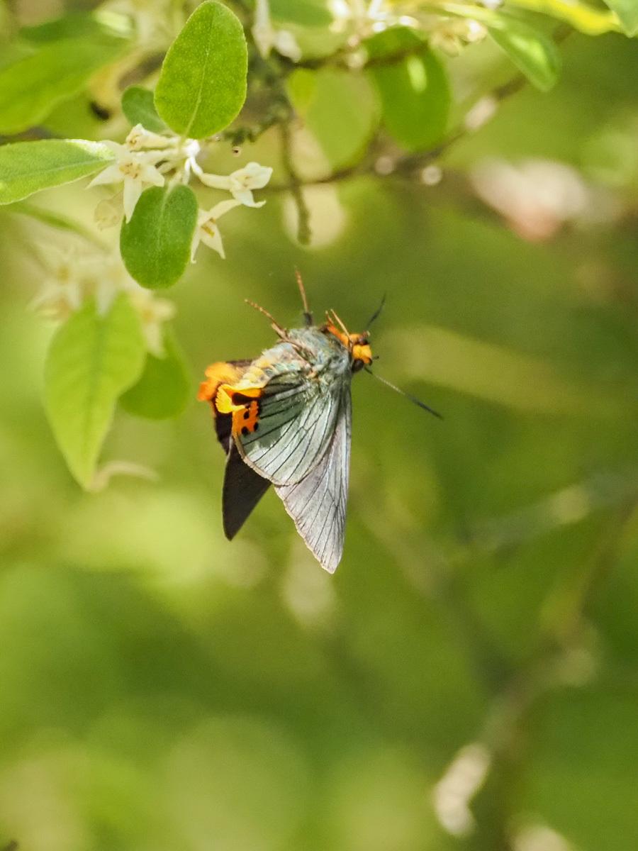 蝶も花から落ちる_b0316339_22065870.jpg