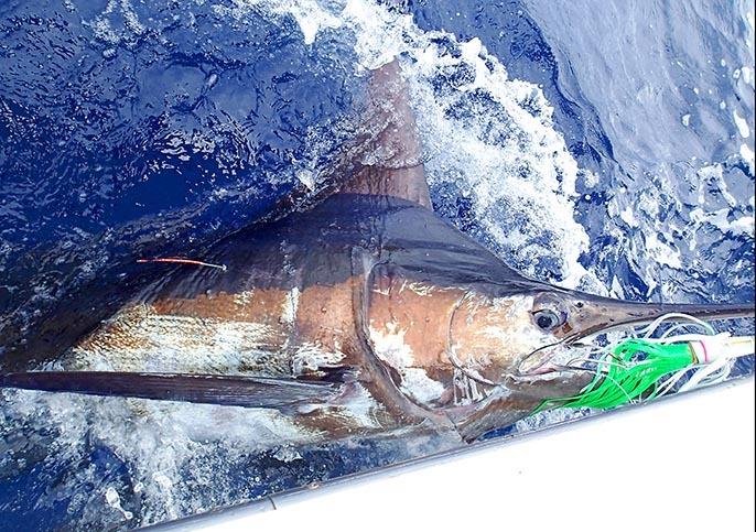 GWのF艇さん沖縄慶良間堆で5本_f0009039_10175669.jpg