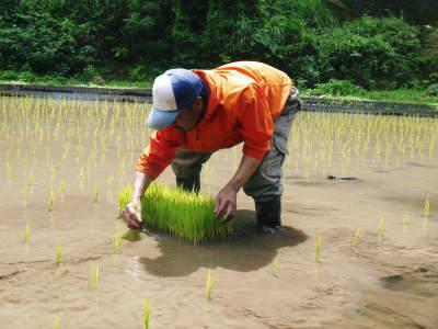米作りの挑戦(2020年) 昨年より1週間早く苗床を作りました!(前編:米作りに取り組むわけとこの地の環境)_a0254656_17593124.jpg