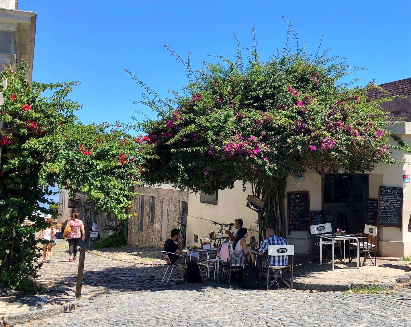 中南米の旅/33 緑に囲まれた街コロニア@ウルグアイ_a0092659_23125871.jpg