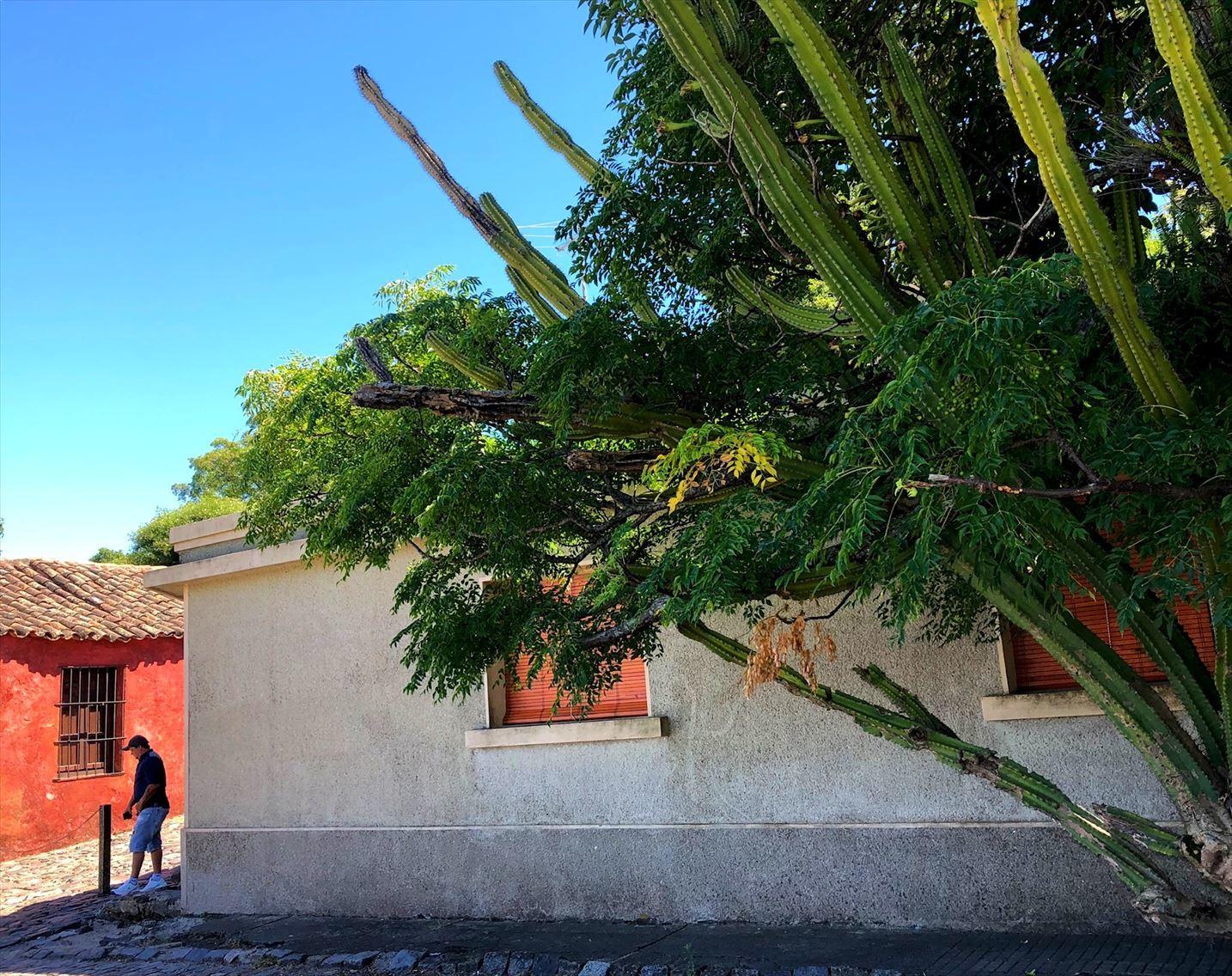 中南米の旅/33 緑に囲まれた街コロニア@ウルグアイ_a0092659_23265889.jpg