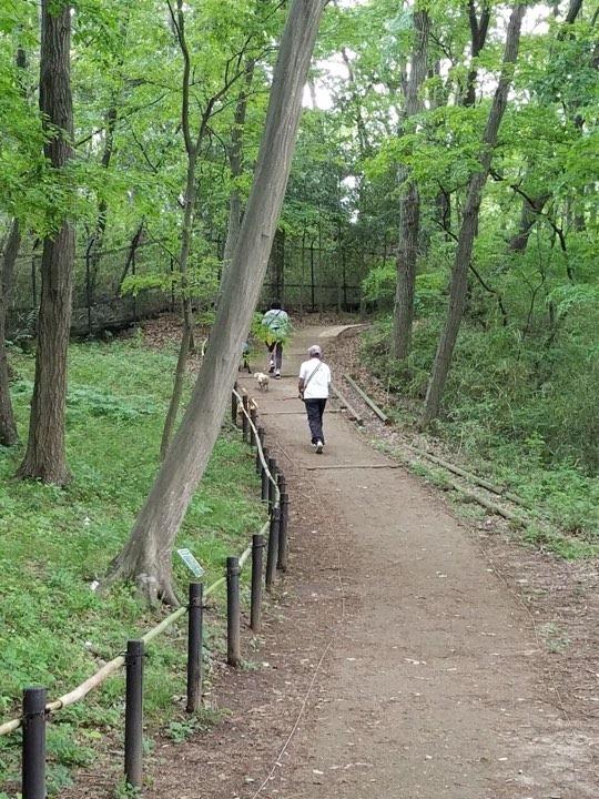 (再)第2回・子豚組パックウォーク@小山内裏公園 開催のお知らせ♪_c0372561_14191151.jpg