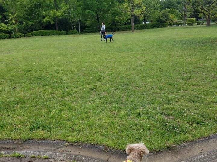 (再)第2回・子豚組パックウォーク@小山内裏公園 開催のお知らせ♪_c0372561_14192394.jpg