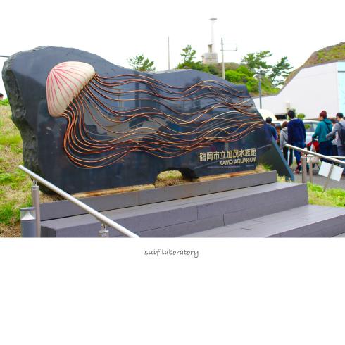 加茂水族館_c0156468_19152529.jpg
