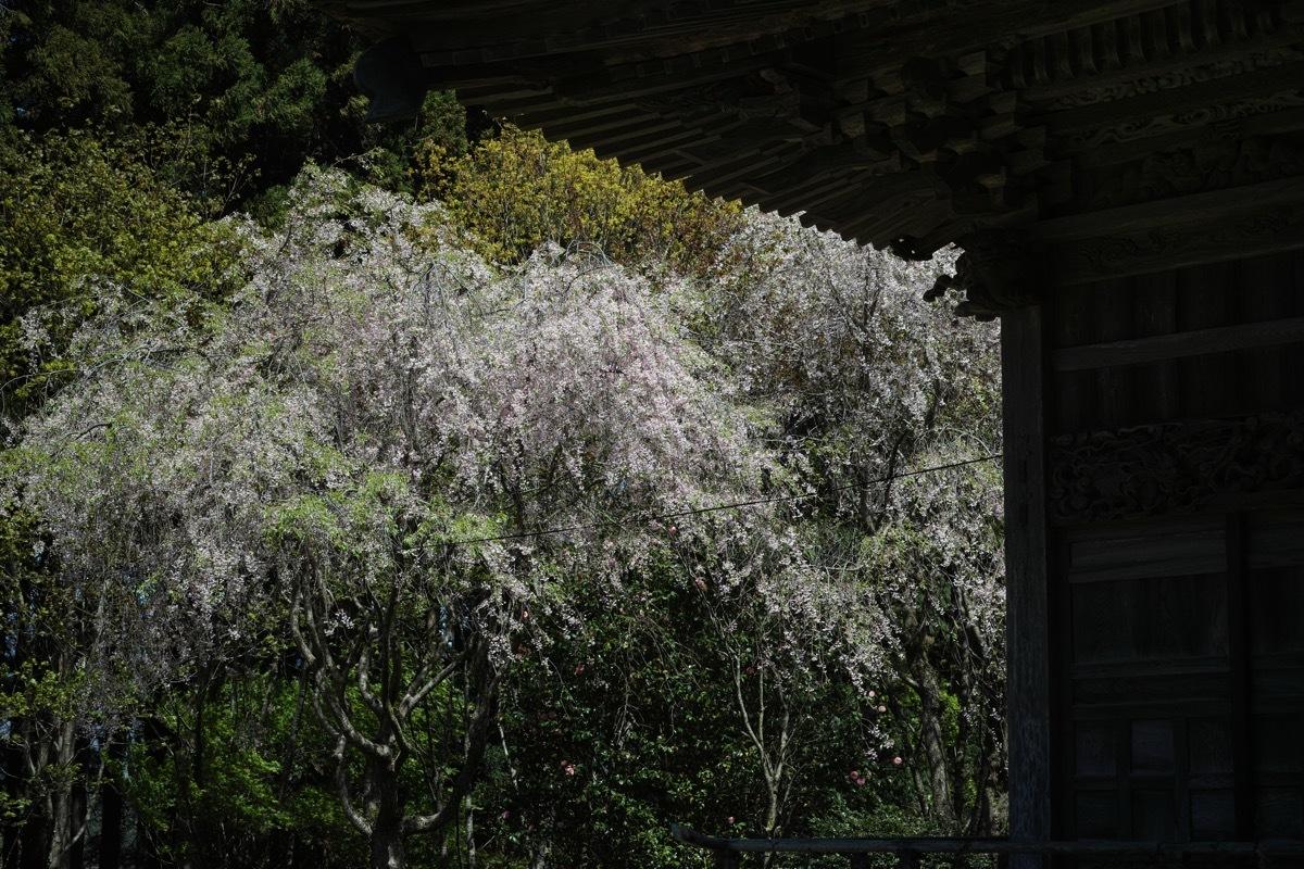 佐渡 牛尾神社_d0133581_10545372.jpg