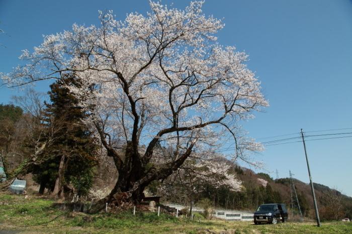 今年を振り返る 4月・群馬桜巡り_e0165983_10200694.jpg