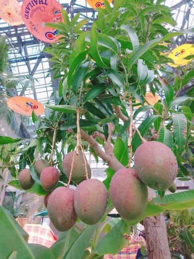 熱帯フルーツに囲まれてバリ舞踊&ガムラン_e0017689_21090788.jpg