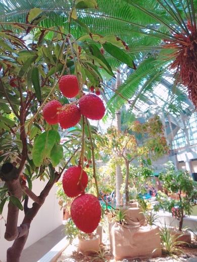 熱帯フルーツに囲まれてバリ舞踊&ガムラン_e0017689_21093176.jpg