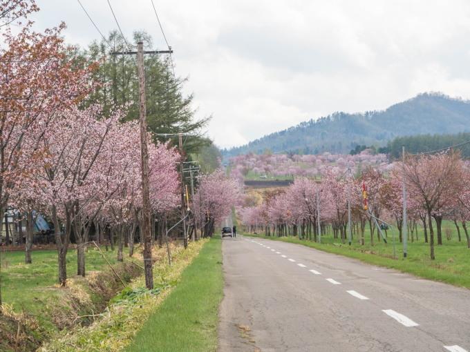 十勝の桜名所になった「桜六花公園」満開でした!_f0276498_23210356.jpg