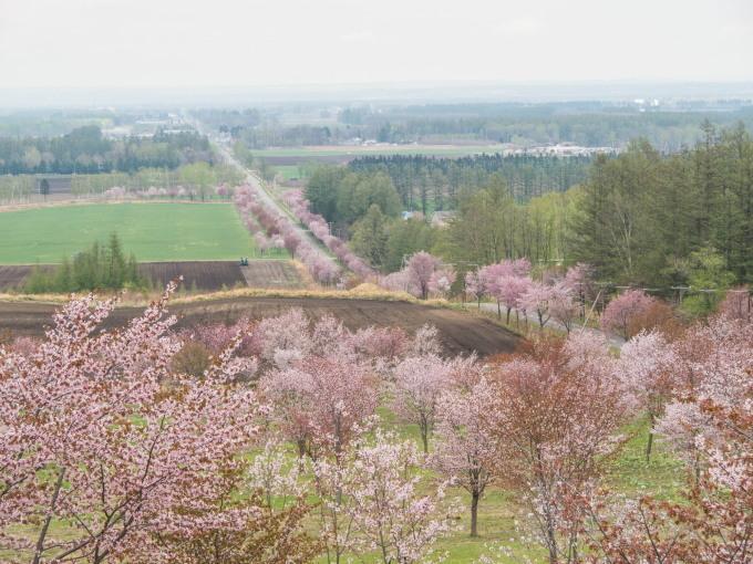 十勝の桜名所になった「桜六花公園」満開でした!_f0276498_23230271.jpg