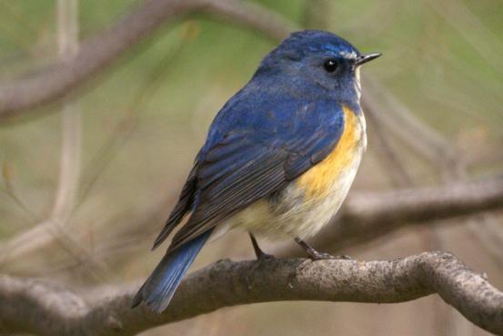 青い鳥_f0064906_13432993.jpg