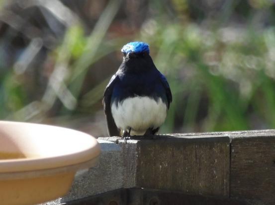 青い鳥_f0064906_13433268.jpg