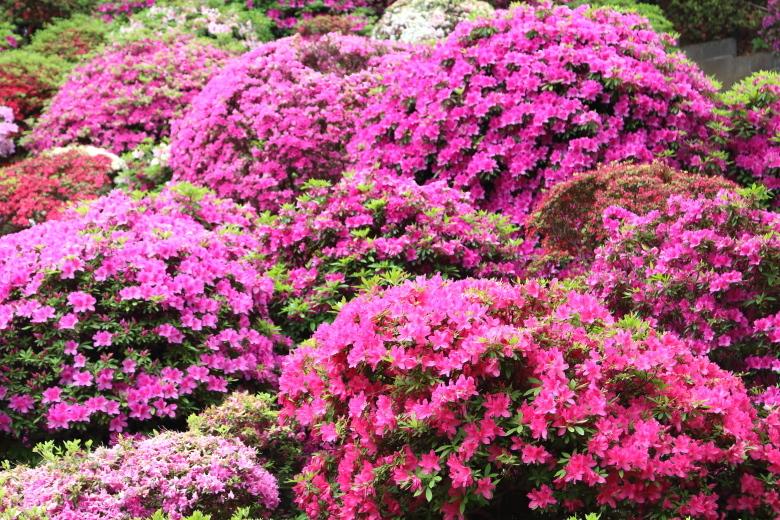 雨桜 - 2019年早春・釜石線 -_b0190710_22095359.jpg