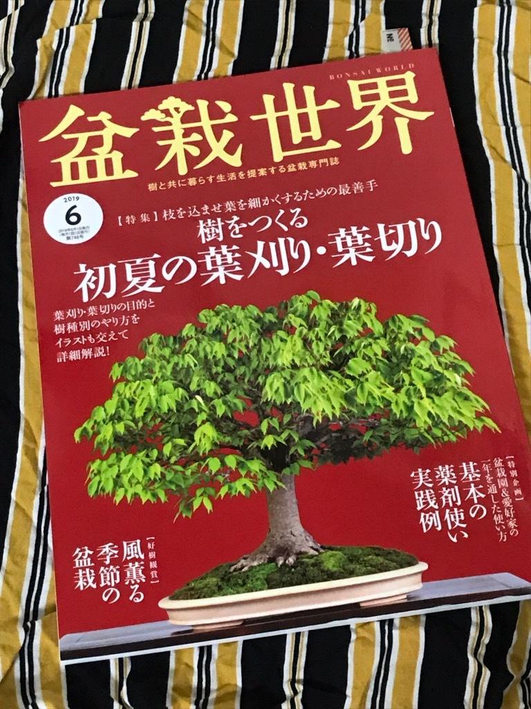 盆栽世界2019.6月号_f0170915_11024483.jpg