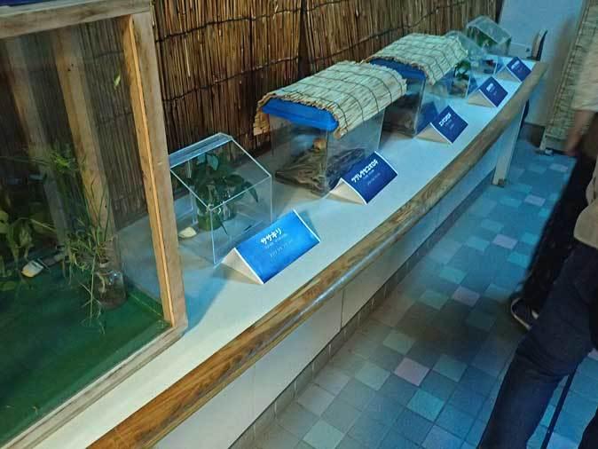 秋の昆虫園本館(多摩動物公園 September 2018)_b0355317_22502466.jpg