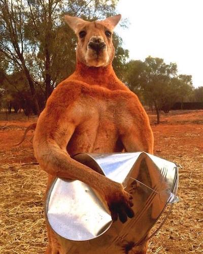 世界の果てで/Orilla del Mundo 世界の果てに立ち、世界の終わりをWaccallanay KangarooのRoger the Muscle Kangarooとともに考えることの意味。_c0109850_05542530.jpg