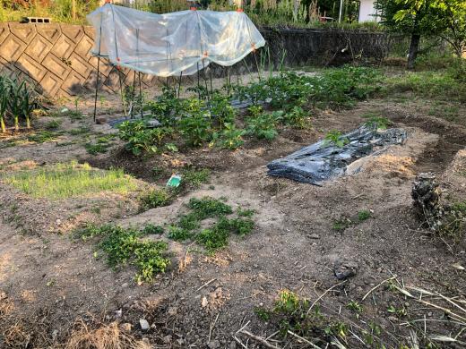 家庭菜園を始めて2年目の夏野菜準備。_e0074251_18065796.jpg