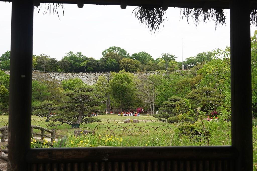 野鳥トレ 161 キビタキ_b0227552_18561402.jpg