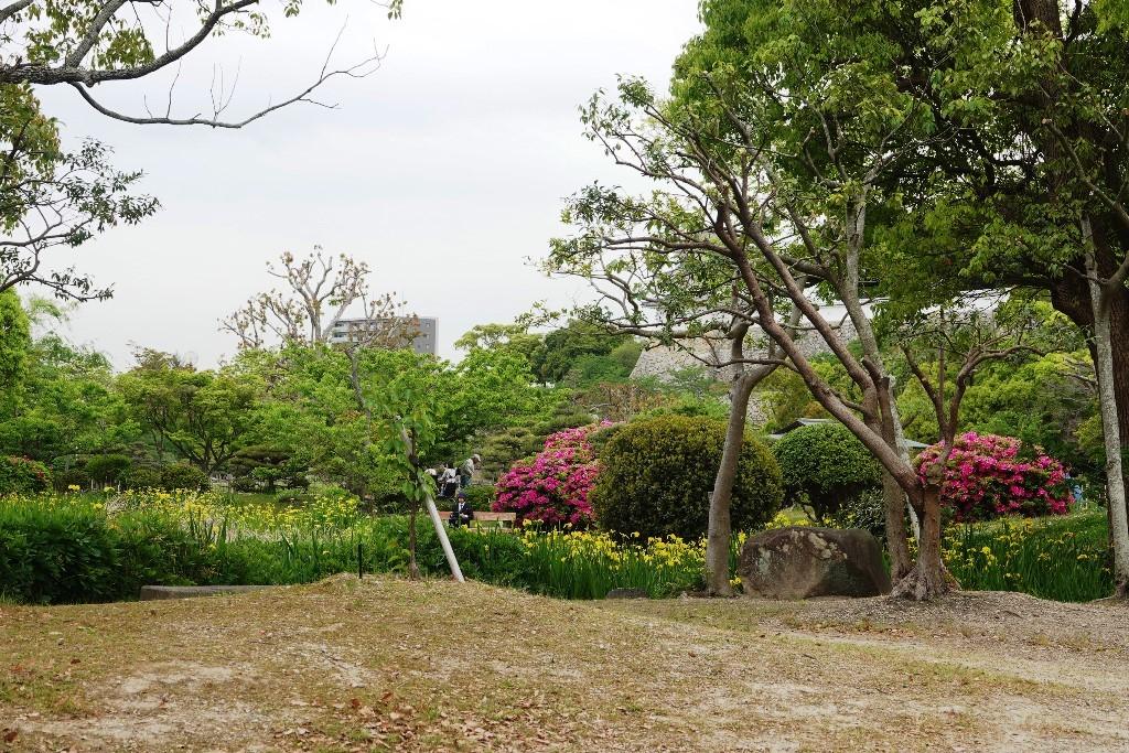 野鳥トレ 161 キビタキ_b0227552_18575768.jpg