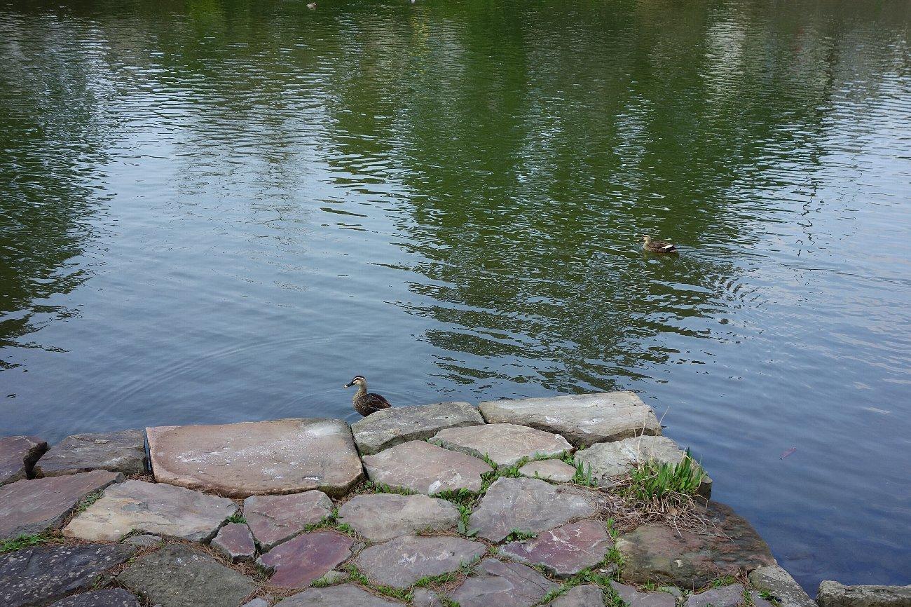 松江城の堀端を歩く_c0112559_08243223.jpg