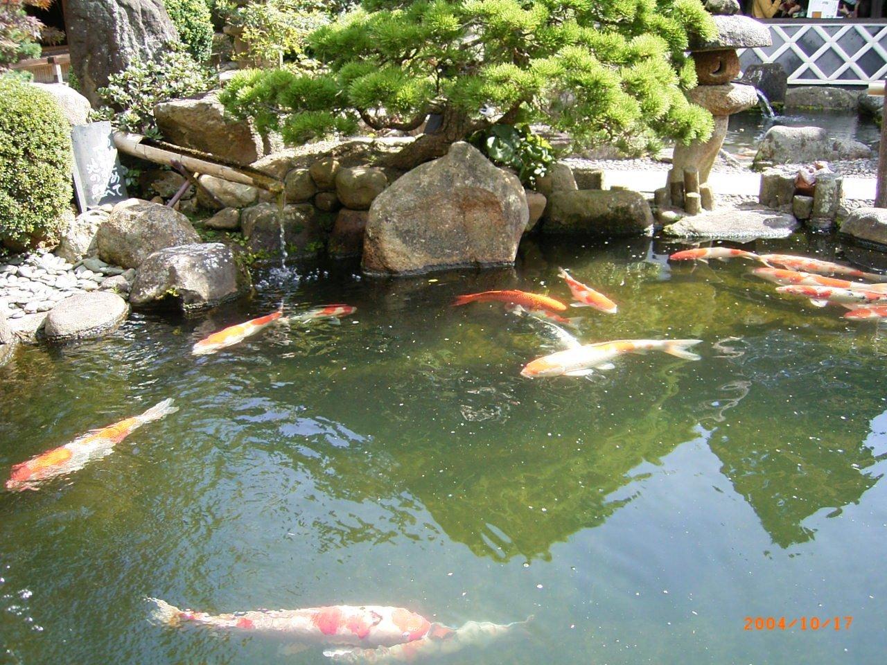 松江城の堀端を歩く_c0112559_08411247.jpg