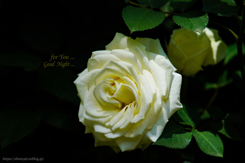 for You ..._a0333661_23315673.jpg